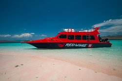 Red Whale Dive Center & Tours