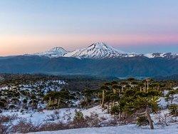 Desde nuestro campamento, vista al Volcan Lonquimay y volcan tolhuaca
