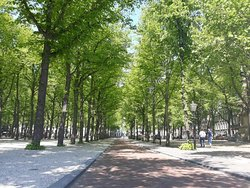 Lange Voorhout 's zomers