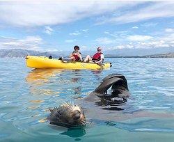 Seal Kayak Kaikoura
