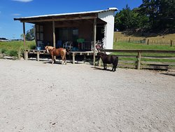 Riverview Treks and Pinehollow Riding School