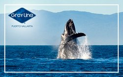 "Be part of this incredible experience, check out our ""Whales Vallarta Activity"""