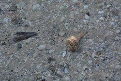 beautiful shells