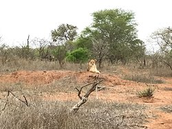 Good day safaris