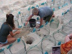 Odkopywanie jaj i zółwików.