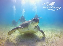 Discover Scuba Diving with Jimmy the Turtle