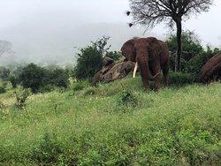 Great Safari from Mombasa