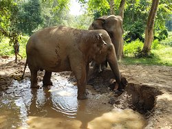 Ethical Tourism to the Elephant's Home in Kanchanaburi, War Museum, Bridge on the River Kwai