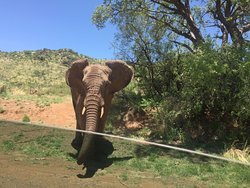 Elephant heading towards us.....