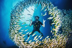 THE BEST Scuba Diving Experience