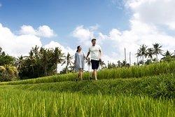 Walk rice paddy around resort