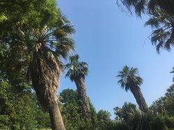 Многочисленные пальмы