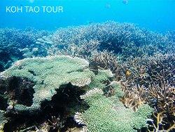 KOH TAO TOUR 17/9/19