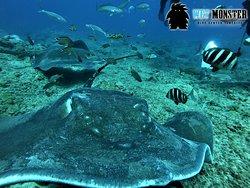 nurkowanie Teneryfa w Los Chuchos z WET MONSTER - Polskie Centrum Nurkowe; dive on Los Chuchos with WET MONSTER Dive Center Tenerife