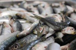 sardine appena arrivate