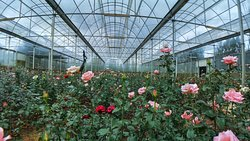 Vườn hoa Đà Lạt