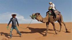 Le chameau vient de nous cueillir un bouquet de fleurs !