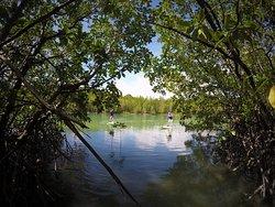Mangroves SUP tour