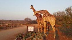 South Post at Kruger