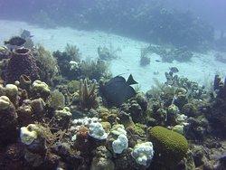 Sea Quest- Butterfly fish amongst reef