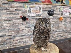 Owlpark Owl Cafe Ikebukuro toky
