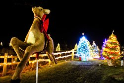 The iconic Reindeer and Christmas Trees