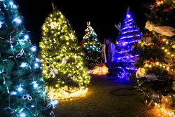 Pretty colourful  Christmas Trees  - a total of about 400 trees.