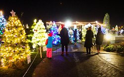 Young and old enjoying the colourful Christmas Trees.