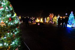 Lots and lots of colourful Christmas Trees - a beautiful occassion and evening