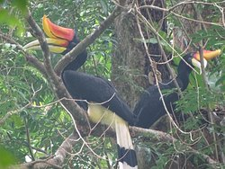 Bukit Lawang Eco-Jungle-Tours