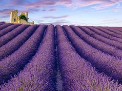 Lavender fields as far as you can see... on the Plateau de Valensole (50 km north of Bras)
