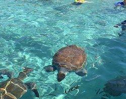 Playa Piscado Turtles