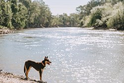 We are located right on the banks of the Murrumbidgee River