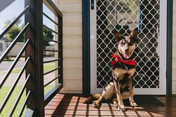 Pet-friendly cabins available on application