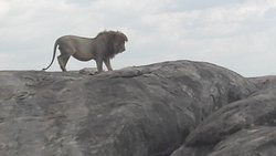 Enjoying game viewing in Tanzania National Parks with Chui Expedition
