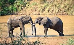 Fourth  time staying at Kruger national park Letaba and it was wonderful. Situated overlooking views a bend in the Letaba River the view is amazing.On arrival we had lunch at the rest camp there which was a very nice experience. more memorable because there were elephants grazing in the mostly dry river bed. The camp is very well run and check in was fast and efficient. The accommodation was very nice and clean with an amazing view over the river bed. From here you could see all sorts of game fr