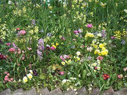 Mixed border of Spring flowers