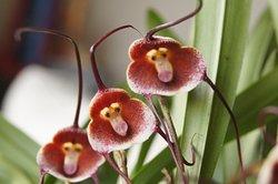 Descubre el maravillo mundo de las orquídeas