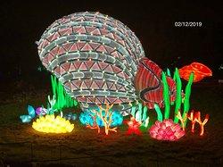 """Coquillage géant à l'exposition """"Océan en Voie d'Illumination"""" au Jardin des Plantes de Paris (5ème)"""