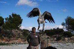 Vulture at the Jardin De Las Aguilas