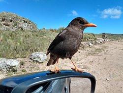 Conoces el Parque Nacional Quebrada del Condorito??? Nosotros te llevamos!!!!