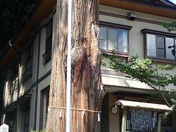 推定400年とされる見事な杉の御神木