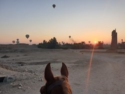 Horse riding holidays in Egypt