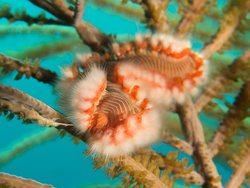 Fireworm by Alexandra HG Photography