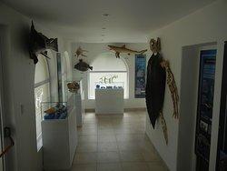 sala de diversidad marina museo de ciencias naturales de miramar punta hermengo
