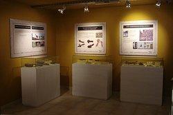 sala de restos arqueológicos museo de ciencias naturales de miramar