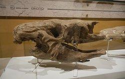 scelidotherium perezoso fósil museo de ciencias naturales de miramar