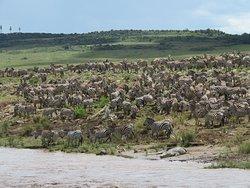 Popular migration spot at the Mara River