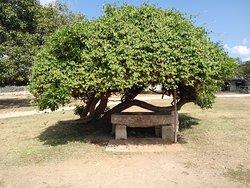In side garden of Jaffna dutch fort .