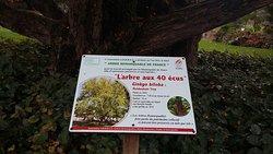 l arbre aux 40 écus
